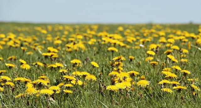 Lletra i Videoclip de la cançó d'en Lluís Llach – Cal que neixin flors a cada instant