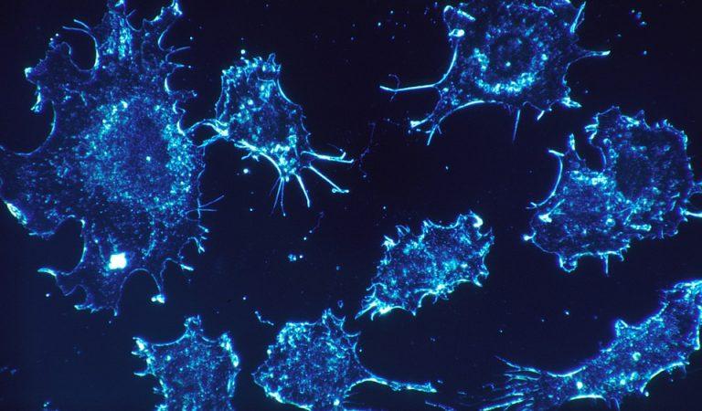 Científics de la Vall d'Hebron creen un fàrmac eficaç en la majoria de càncers.