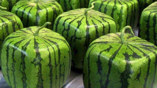Heu tastat les síndries quadrades? Sabeu com es cultiven?