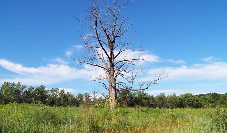 La tradicional Tallada de l'arbre de Maig de Cornellà de Terri quasi acaba en tragèdia