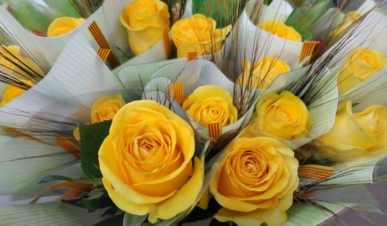 Sabeu quina és la Flor Nacional de Catalunya?