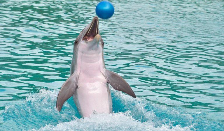 Barcelona ja no té dofins en captivitat, elNuik, elTumayi el Blau abandonen el Zoo.