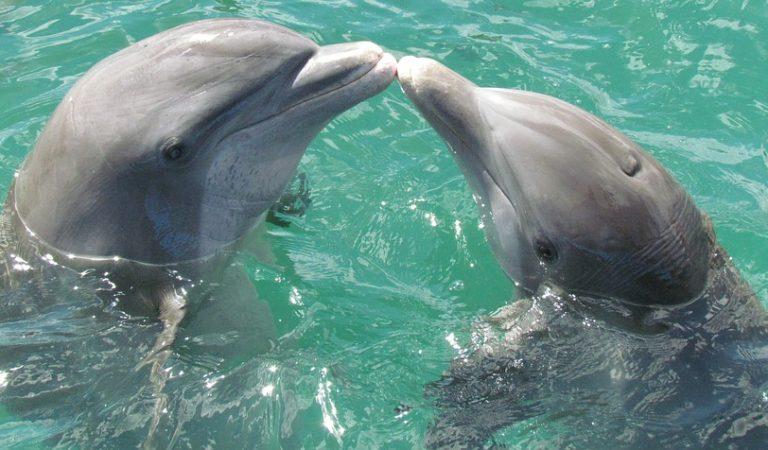 Catalunya podria acollir el segon Refugi de Dofins del món