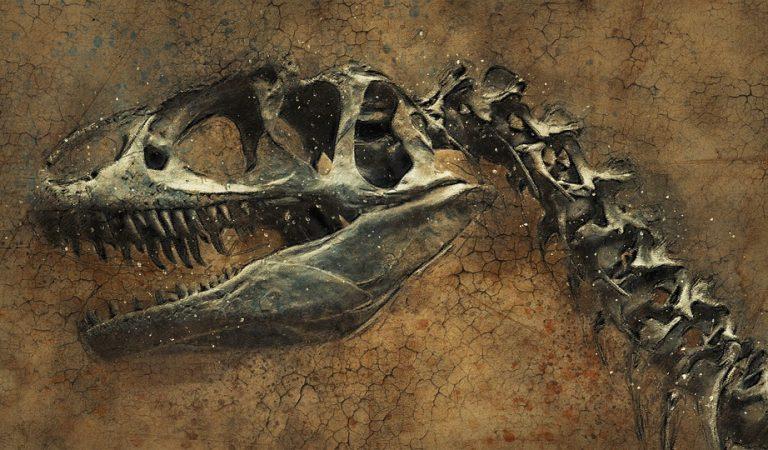 El Jaciment amb restes de Dinosaures més modern d'Europa el tenim al Pallars Jussà.