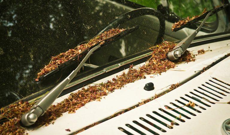 Què ha passat amb els insectes que s'estavellaven en el parabrisa del cotxe, on han anat a parar?