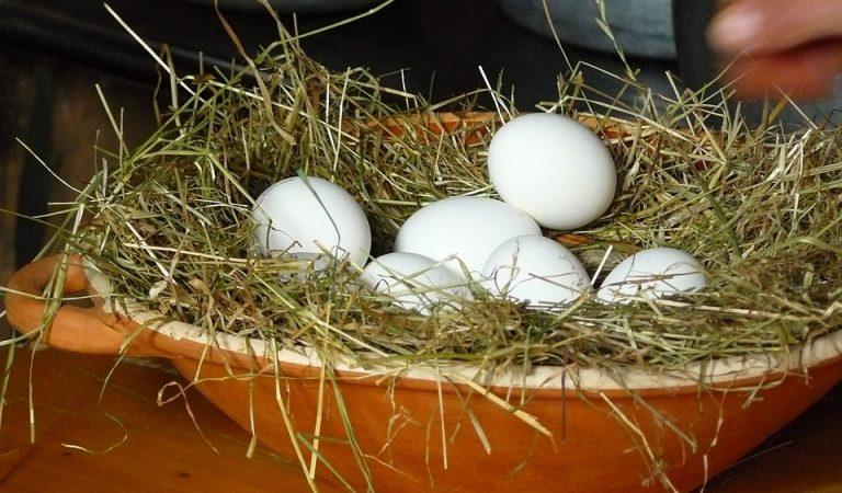 Perquè ja no veiem ous blancs a les botigues?