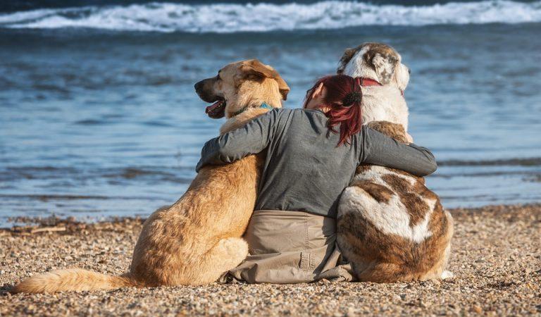 Barcelona estudia establir franges horàries per passejar els gossos en determinats espais