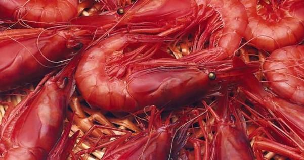 Les autoritats sanitàries aconsellen no xarrupar els caps de les gambes i altres crustacis.
