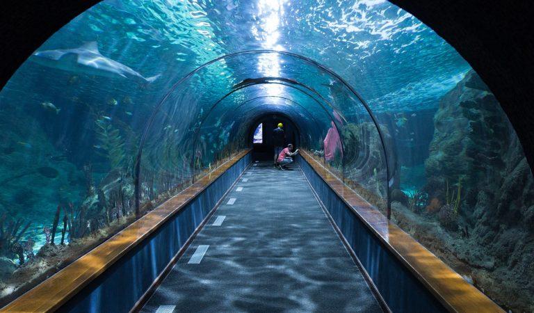 25 aniversari de l'Aquàrium de Barcelona – Entrades gratis per als joves i infants