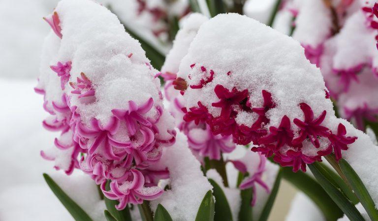 Torna la neu a una Catalunya deserta – #nevadaconfinada.