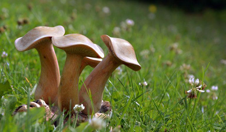 Esterri d'Àneu tindrà un circuit d'escultures de fusta de la flora i fauna pirenaica