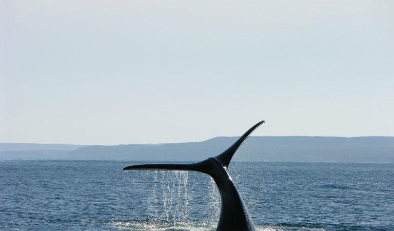 Albirament d'una família de balenes davant la costa barcelonina que obliga a suspendre el trànsit marítim.