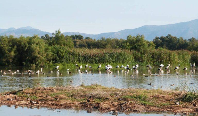 Detectada la grip aviària en quatre aus mortes als Aiguamolls de l'Empordà