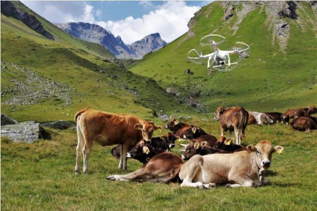 El futur de les pastures d'alta muntanya implica substituir els pastors per drons?