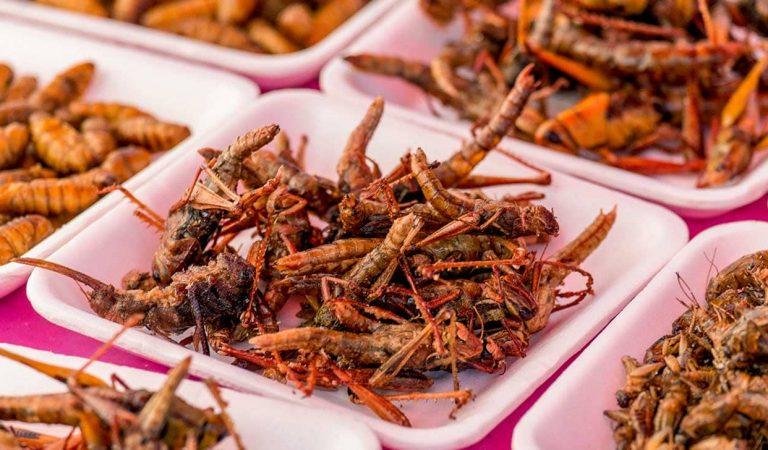 Informe de la FAO sobre els riscos per a la salut en introduir els insectes en l'alimentació humana