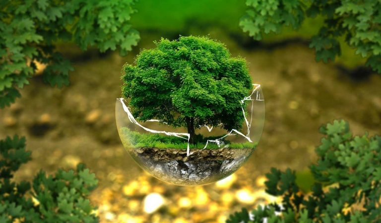 Per què i des de quan el 5 de juny celebrem el Dia Mundial del Medi Ambient?