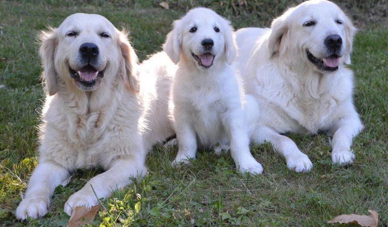 Avui 21 de juliol celebrem el Dia Mundial del Gos