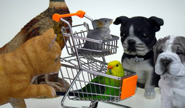 La nova Llei de benestar animal prohibirà vendre mascotes a les botigues i reconvertirà els Zoològics.
