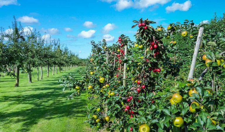 Ametller Origen preveu crear un Parc Agrari al Penedès amb una inversió de 180 milions d'euros